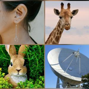 知られていない耳の作用✨❤️