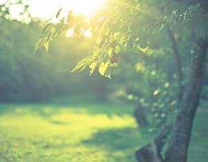 左利きの妻、惜しみなく与える木