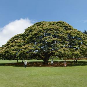 【蔵出し写真館】新緑の季節なので、おもしろい木の写真3選