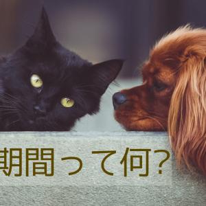 ペット保険の待機期間とは?待機期間なしの保険はあるの?徹底比較!