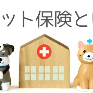 【ペット保険とは何か】失敗しない選び方は??知りたい情報を大公開!!