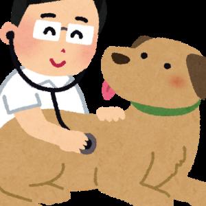 2.犬と日本に帰る場合(抗体検査後)