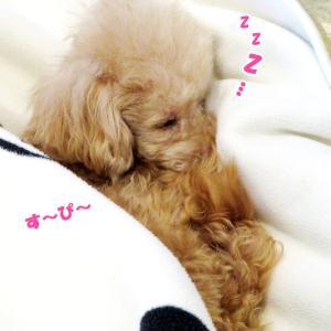 かわいい寝顔♡