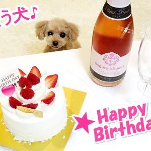 【歌う犬】Happy Birthday Mama!