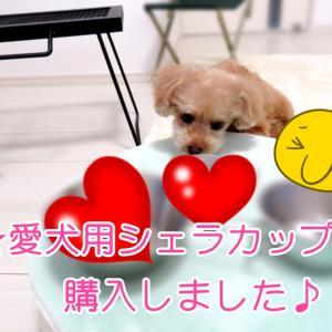 【動画】愛犬用シェラカップ購入しました♪【snow peak】