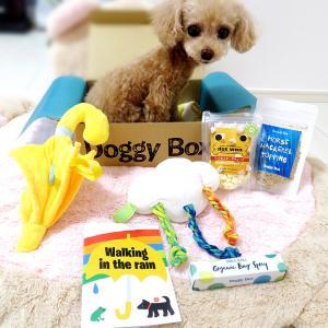 初めての【Doggy Box】6月号