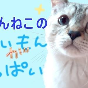 ■■ サイトマップ ■■