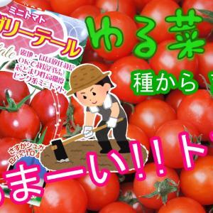 【日々のこと】【ゆる菜園】シュガリーテール種まきから挑戦中!その2