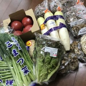 野菜激安購入!さすがにセミは食べたくない!