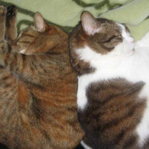 19歳の猫が飲まず食わずになった。苦しむ姿は見たくない。