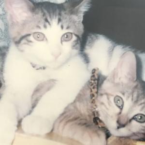 老衰の猫さん、飲まず食わず13日目で亡くなりました。