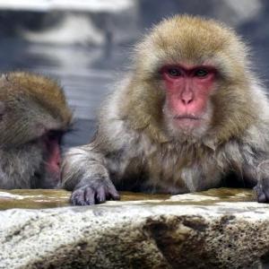 高崎山での猿のお話