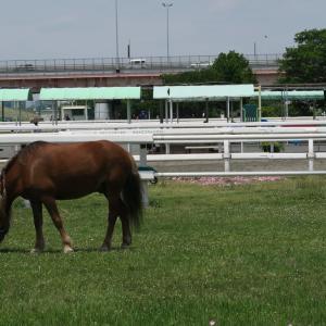 江戸川ポニーランドの馬 #江戸川 #ポニーランド #ZIP