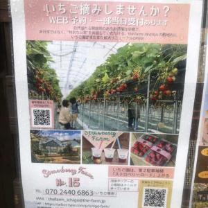 【茨木市】いちご狩りに行ってきました〜【THE FARM UNIVERSAL】