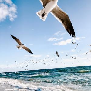 チャンスは誰の周りにもある!~もっと自由の翼を広げよう~