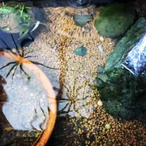 メダカの稚魚…10月も半ばなのにまだまだ小さい💦