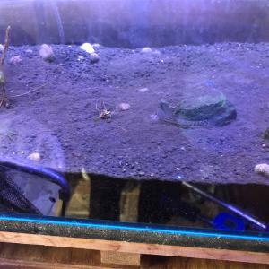 水槽リセット‼️赤玉土底面ろ過水槽立ち上げ① ソイルはどうやって捨てる?