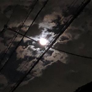 エビは満月に抱卵する説…