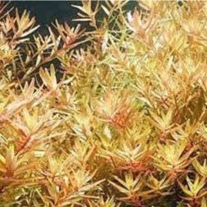 アクアリウムの水草、お魚選び🌱🐟アクアリウムを始めようと思ったら見てほしいブログ④