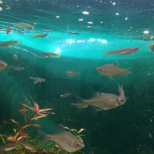 タナゴを釣る‼️
