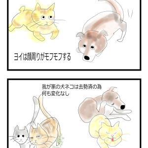 犬ネコが教えてくれる季節の変わり目