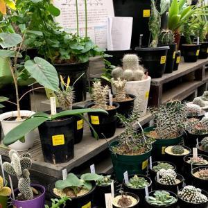 植物好きのメッカ!?オザキフラワーパークの初売りを覗いてみた!