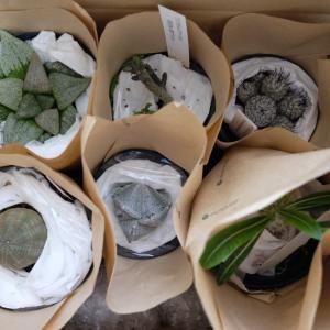 プロトリーフのサボテン・多肉植物福袋を開けてみた!