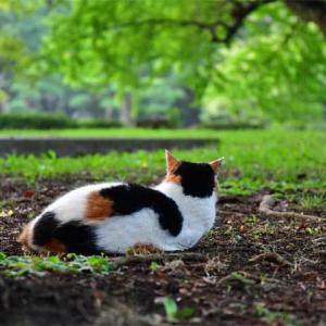 チラックス chillax 外猫スタイル outdoor cat style