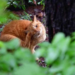 濡葉猫1 wet leaves おはよう good morning!