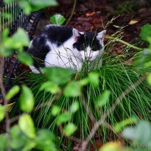 濡葉猫2 wet leaves おはよう good morning!