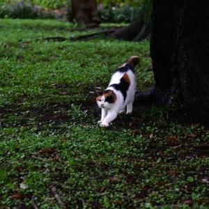 早朝猫 early morning おはよー good morning!