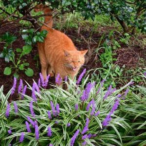 花越しに over the flowers おはよう good morning!