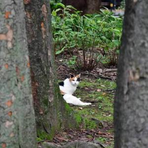 欅林 keyaki trees