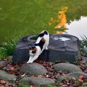 池に映る秋 autumn reflections