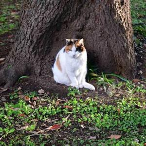 アルコーブ猫 alcove cat