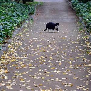 葉葉葉 leaves