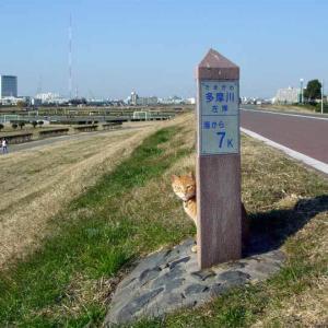 Tama River タマちゃん (茶トラ猫) 2003