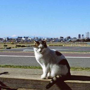 Tama River タマちゃん (2猫) と富士山 (えっ?!) 2003