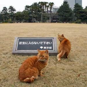 芝生に入らないで下さい 東京都 Keep Off The Lawn