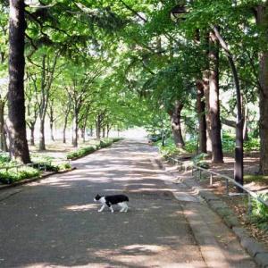 新緑の道 横切る猫 横切らない猫 Crossing and stopping