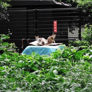 屋根の上のトリオ猫 Cat trio on the roof