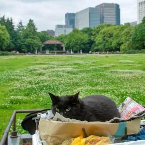 ホームレスさんの黒猫が18歳だった説について
