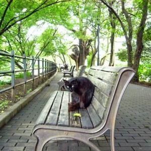 木陰のベンチ Bench in the shade