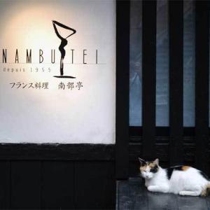 フレンチレストランの看板猫 Chat mascotte