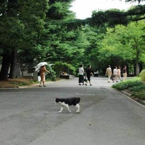 黒白猫が道を横切る B/w cat crossing the path