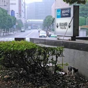 東京メトロ 日比谷駅出入口の猫 Tokyo Metro Hibiya