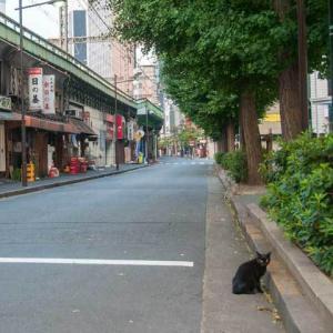 JR有楽町駅前の猫 JR Yurakucho Station