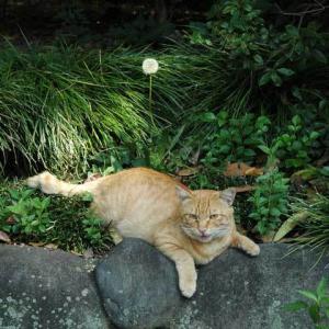 ダンディライオン Dandy Lion (タンポポの綿毛)