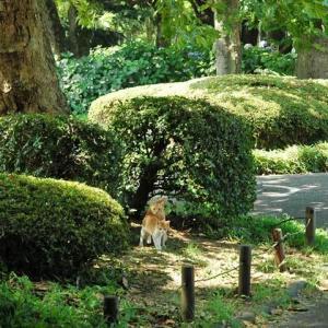 プラタナスの木の下で Under platanus tree