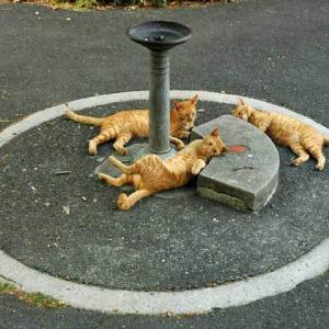 サークル猫 Cats in a circle